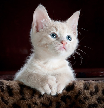 image of a cute kitten